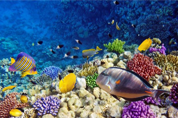 Подводный мир фотообои для ванны (underwater-world-00170)