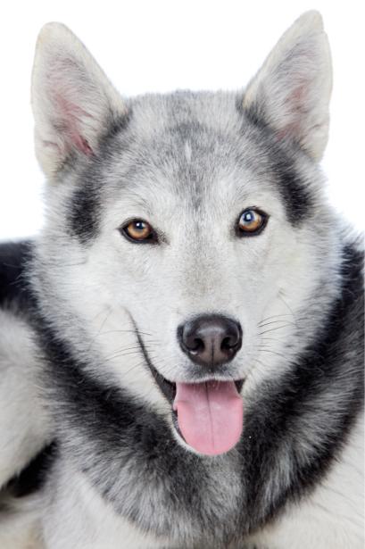 Фотообои Волк портрет (animals-0000423)
