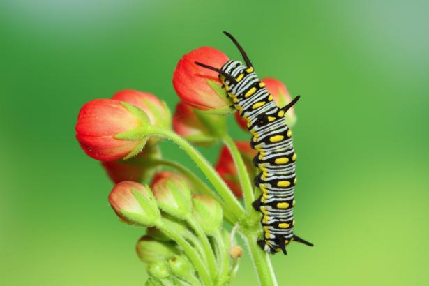 Фотообои Гусеница цветок (animals-0000447)