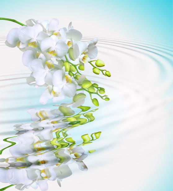 Белая орхидея фотообои цветов на стену (flowers-0000052)