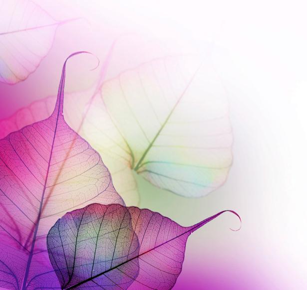 Фотообои на стену -  Цветные листочки (flowers-0000173)