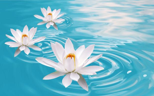 Фотообои на стену -  Белая лилия в пруду (flowers-0000179)