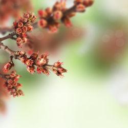 flowers-0000634