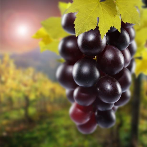 Гроздь винограда обои в кухню (food-0000203)