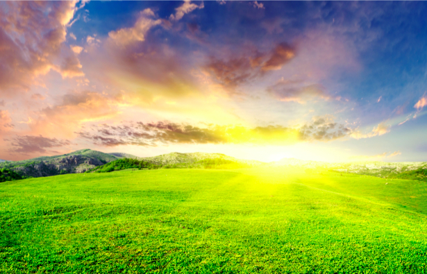 Фотообои с природой поле и небо (nature-00046)