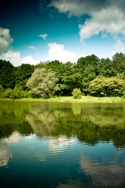Фотообои река лес пейзаж фото (nature-00210)