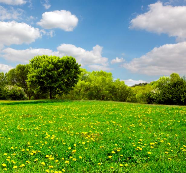Фотообои поле, лес (nature-00299)