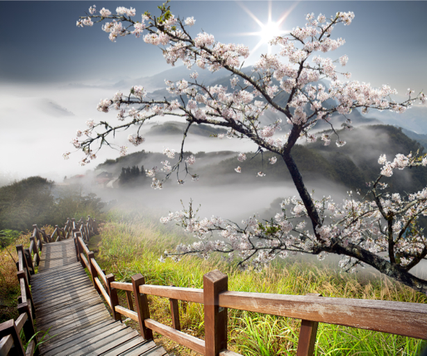Фотообои на горе лестница вишня (nature-00550)