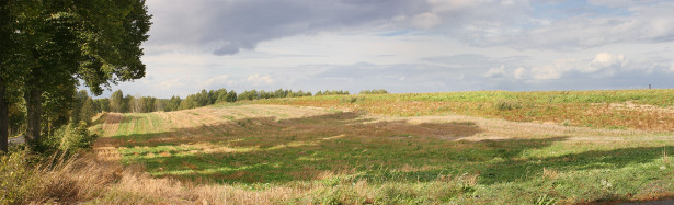 Фотообои лесная панорама поле (panorama_0000021)