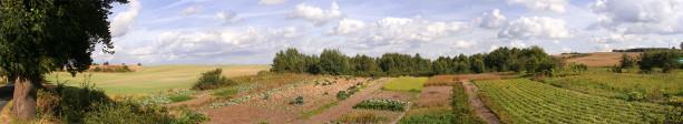Фотообои панорама лес (panorama_0000032)