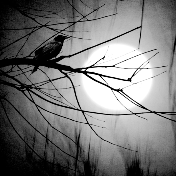 Фотообои ворона на дереве (animals-0000038)
