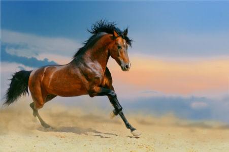 Фотообои конь лошадь в природе (animals-0000159)