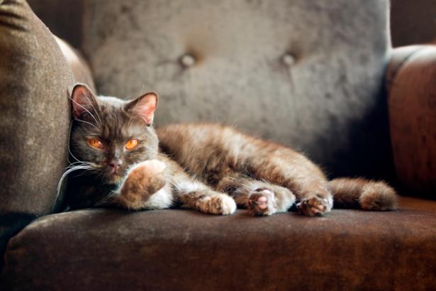 Фотообои кот на кресле (animals-0000247)