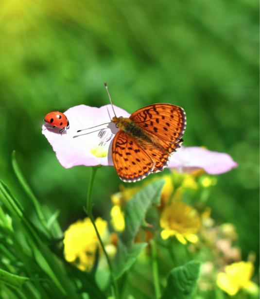 Фотообои бабочка и цветок (animals-0000333)