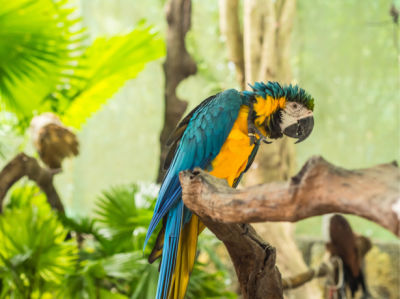 Фотообои попугаи ара фото (animals-0000499)