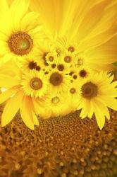 flowers-0000186