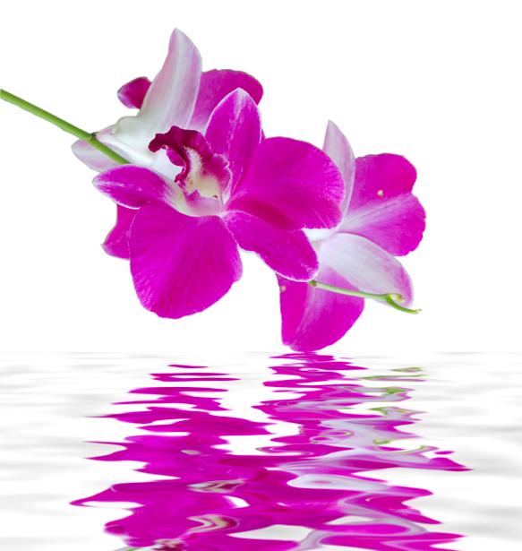 Ветка розовой орхидеи над водой фото обои цветы (flowers-0000239)