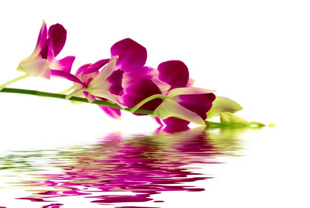 Фото обои Ветка розовой орхидеи над водой (flowers-0000298)