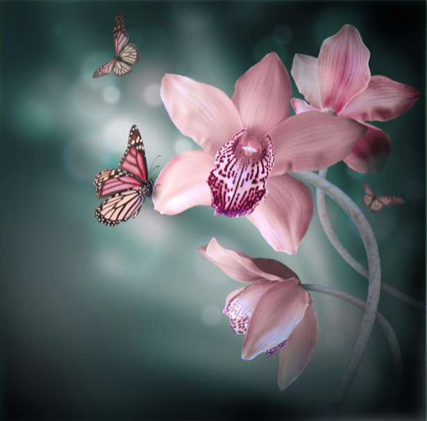 Орхидеи и бабочки - Фото обои на стену (flowers-0000390)