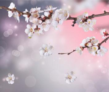 Обои фото ветка цветущего дерева (flowers-0000419)