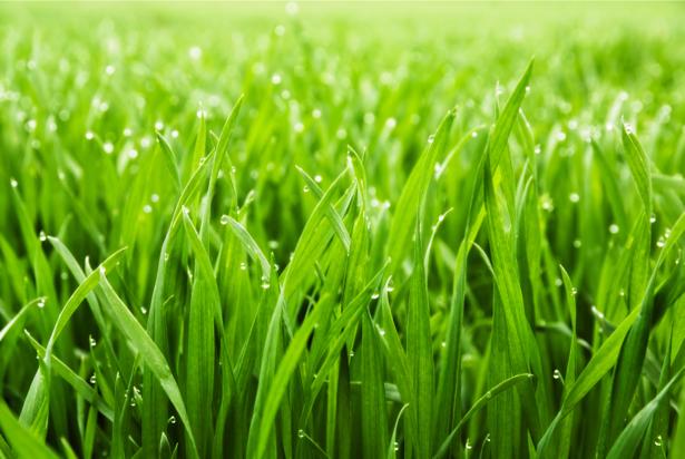 Фото обои на стену поле травы (flowers-0000459)