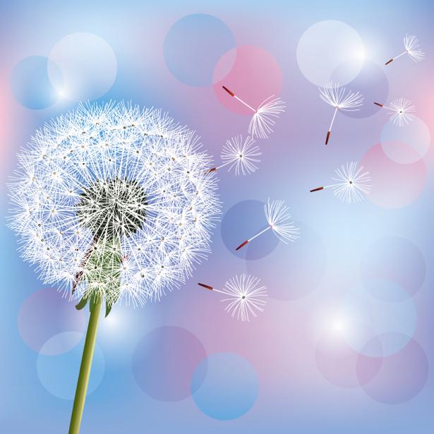 Обои фото цветок Одуванчик (flowers-0000603)