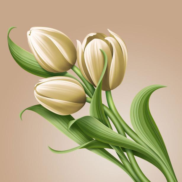 Фотообои Рисованные белые тюльпаны (flowers-742)