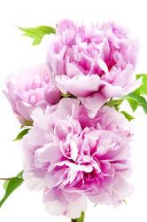 flowers-771