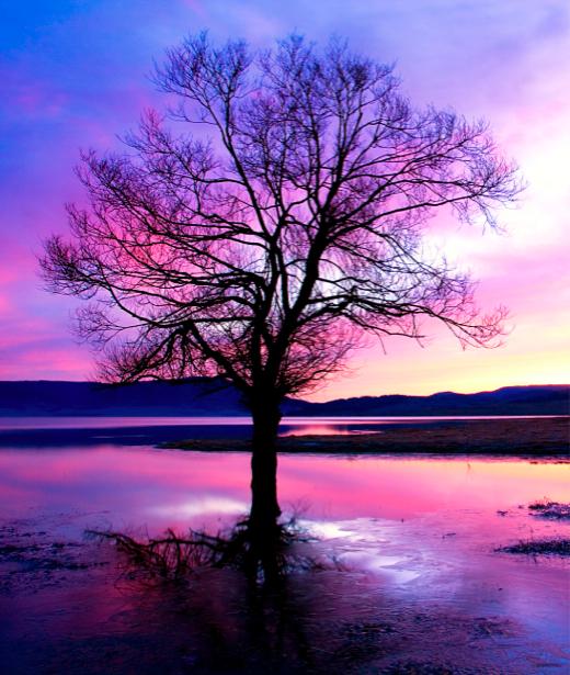 Фотообои фиолет в природе река дерево (nature-00178)