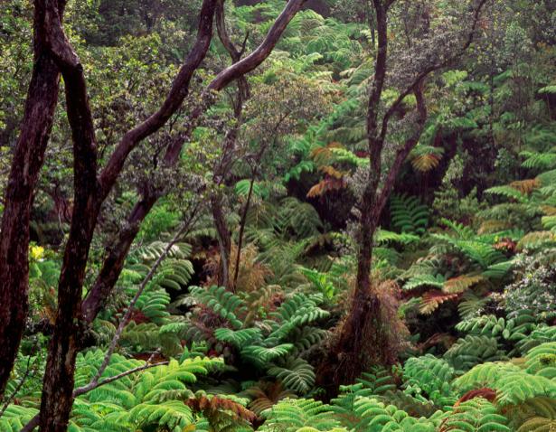 Фотообои лес пейзаж (nature-00228)