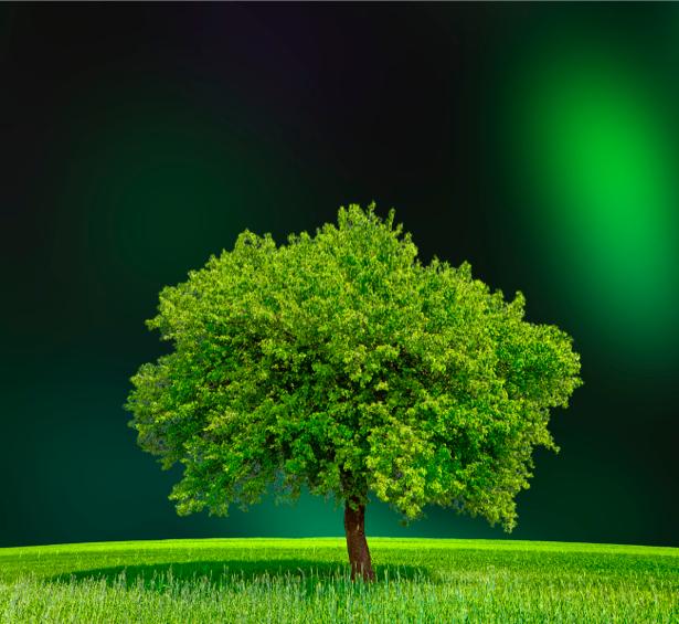 Фотообои дерево в поле ночь (nature-00314)