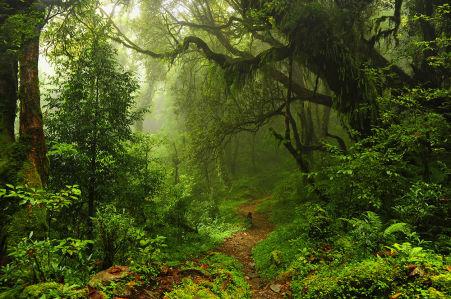 Фотообои Лес в Непале (nature-876)