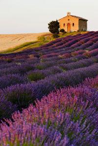 Фотообои Часовня на лавандовом поле (nature-882)