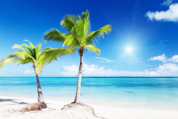 Фотообои две пальмы на берегу моря (sea-0000183)