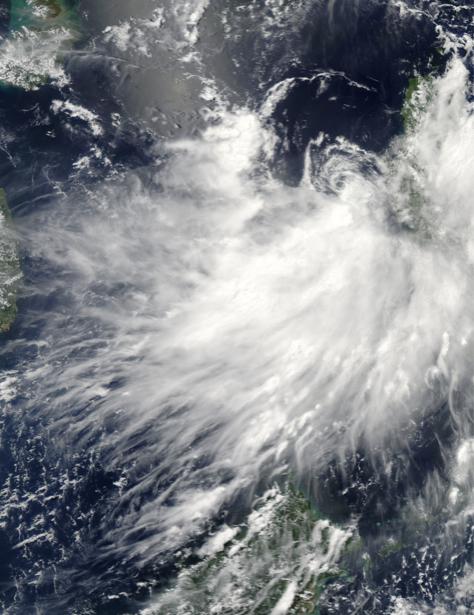 Фотообои фото пух перо ветров (terra-00110)