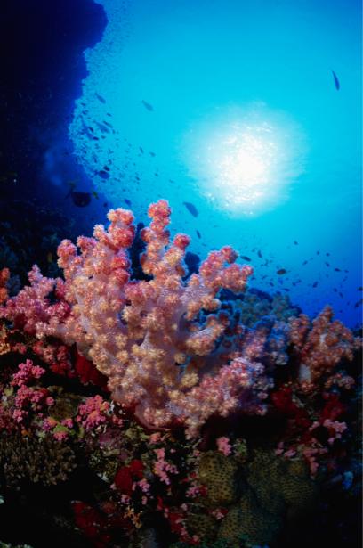 Фотообои 3д подводный мир кораллы (underwater-world-00063)