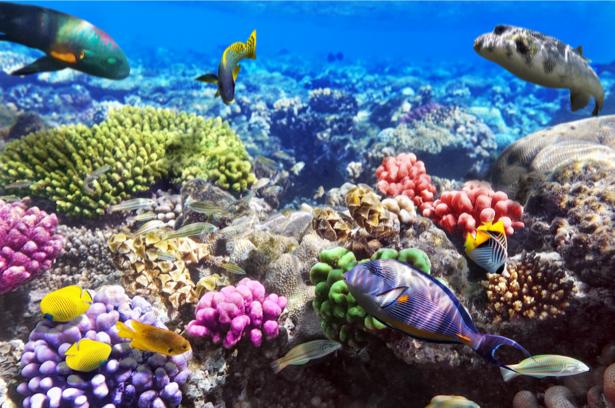 Фотообои для ванны коралловый риф (underwater-world-00160)