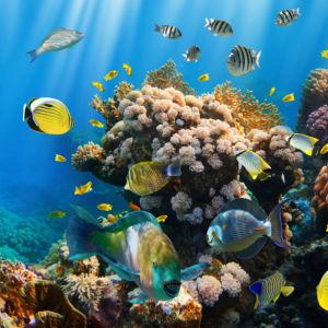 Фотообои в ванную рыбки подводный мир (underwater-world-00209)