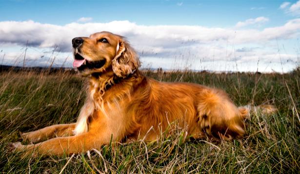 Фотообои собака охота (animals-0000014)