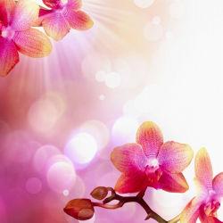 flowers-0000035