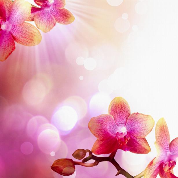 Рыжая орхидея Фотообои на стену цветы (flowers-0000035)
