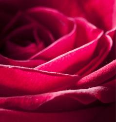 flowers-0000081