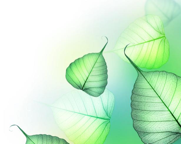 Фотообои на стену -  Зеленые листочки (flowers-0000175)