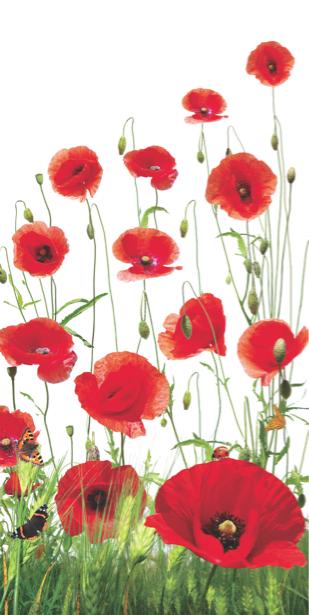 Фотообои на стену Маки спальня (flowers-0000219)