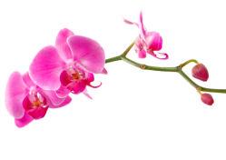 flowers-0000294