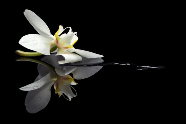 Белая орхидея на черном стеклянном фоне (flowers-0000399)