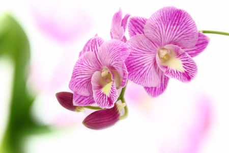 Фото обои цветок ветка орхидеи (flowers-0000524)
