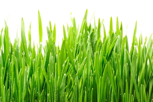 Фото обои для стен зеленая трава (flowers-0000594)