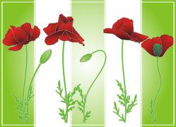 flowers-0000719