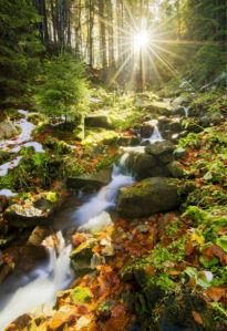 Фотообои водопад в лесу (nature-0000830)